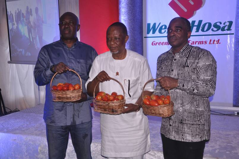 Nigerian Tomatoes ready for Export