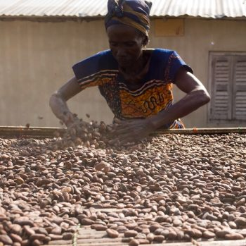 NEPC exports cocoa processing - drying cocoa beans