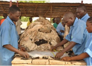 NEPC leather exporters - ztannery processing